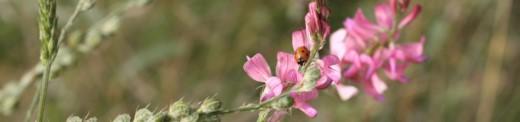Sulla Honey (Hedysarium Coronarium)
